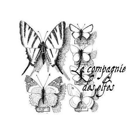 Le pas à pas de Clara  Fond-papillons-grand-tampon-nm