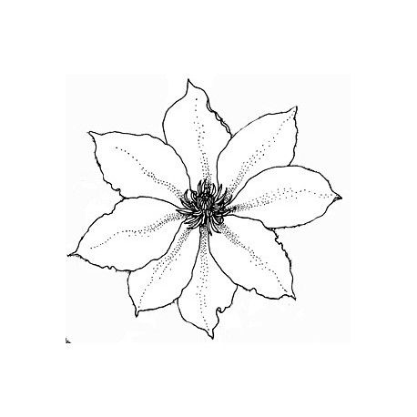 """animation """" pas à pas """" avec la princesse Aby   pour le 2 décembre  Clematite-fleur-tampon-nm"""