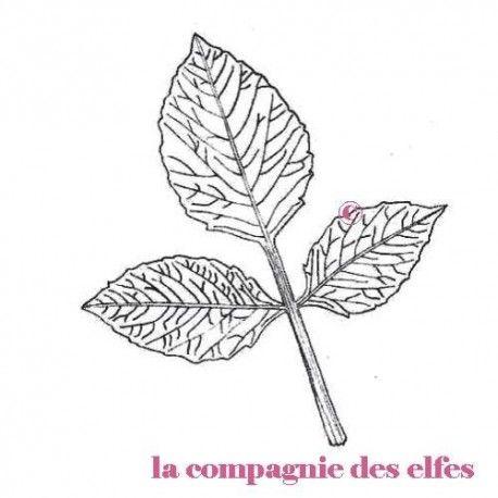 """1 novembre défit """" inspiration """" de scraptyfingers  Feuille-dahlia-petit-modele-tampon-nm"""