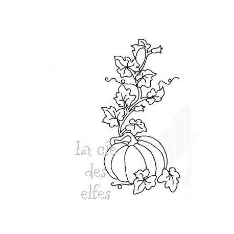 les minis albums d'octobre 2016 La-citrouille-du-jardin-nm